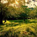 Kostenlos Grundstück zur Selbstversorgung finden