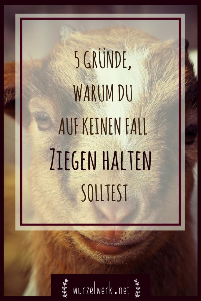 Du willst Ziegen halten? Das solltest du dir gut überlegen. ;) Hier kommen fünf Gründe, warum du auf keinen Fall Ziegen halten solltest. #bauernhof #selbstversorger #selbstversorgung #ziegen #ziegenhalten