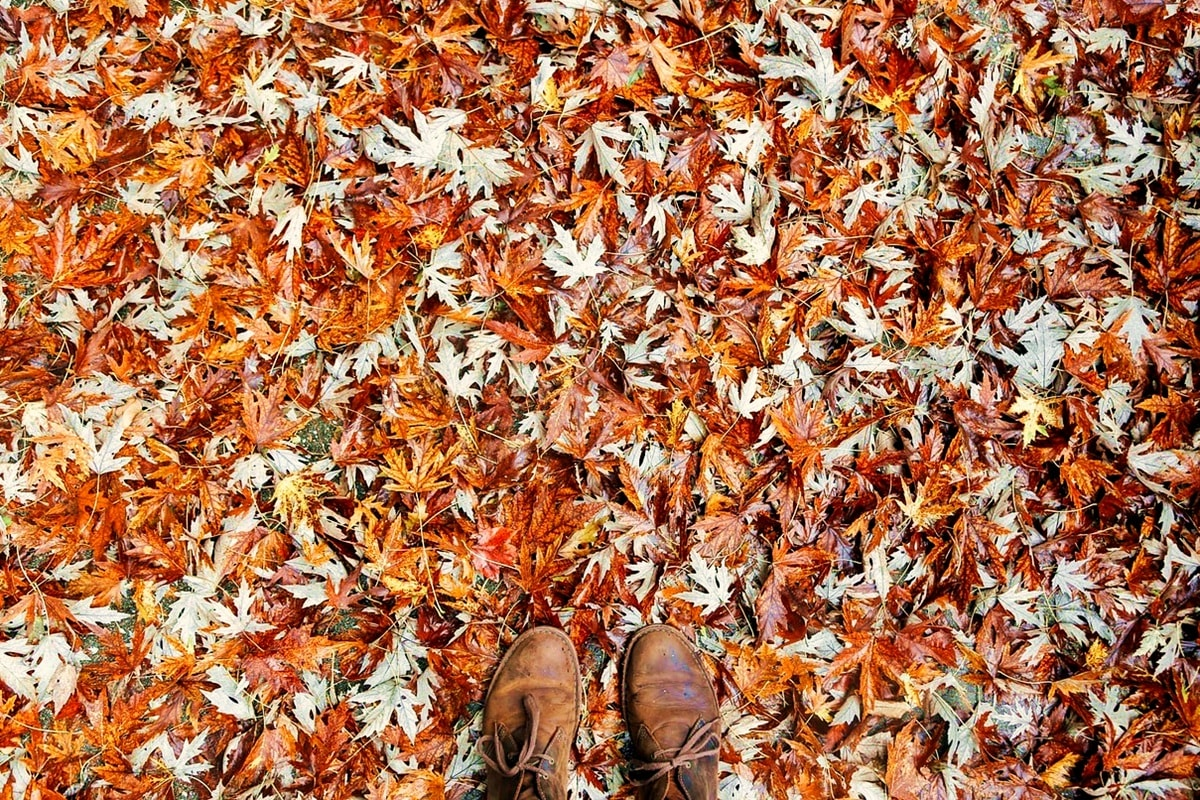 Anwendungen von Herbstlaub im Gemüsegarten-min
