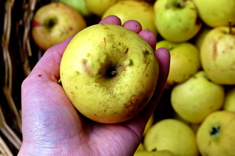 Apfelmus-einkochen-Apfel