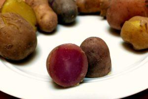 Kartoffelsorten-für-Garten-Rosemarie