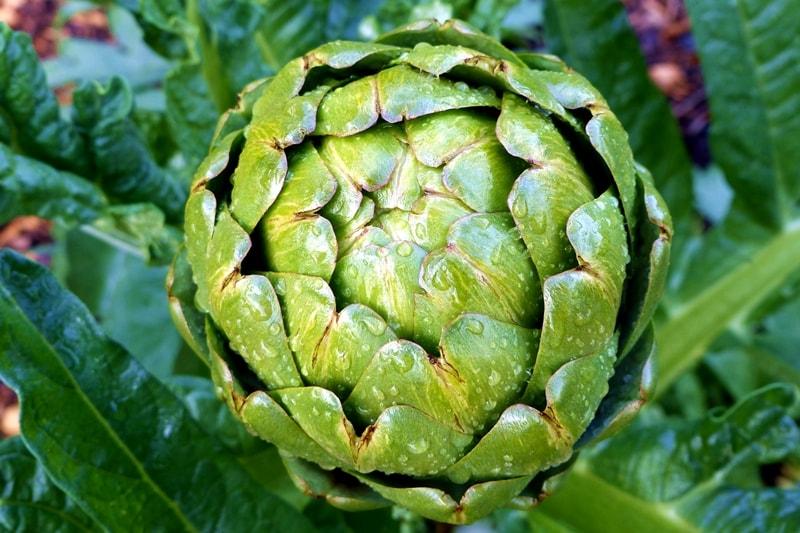 Gemüsegarten-anlegen-pflegeleicht
