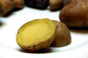 Kartoffelsorten-für-Garten-Eersteling