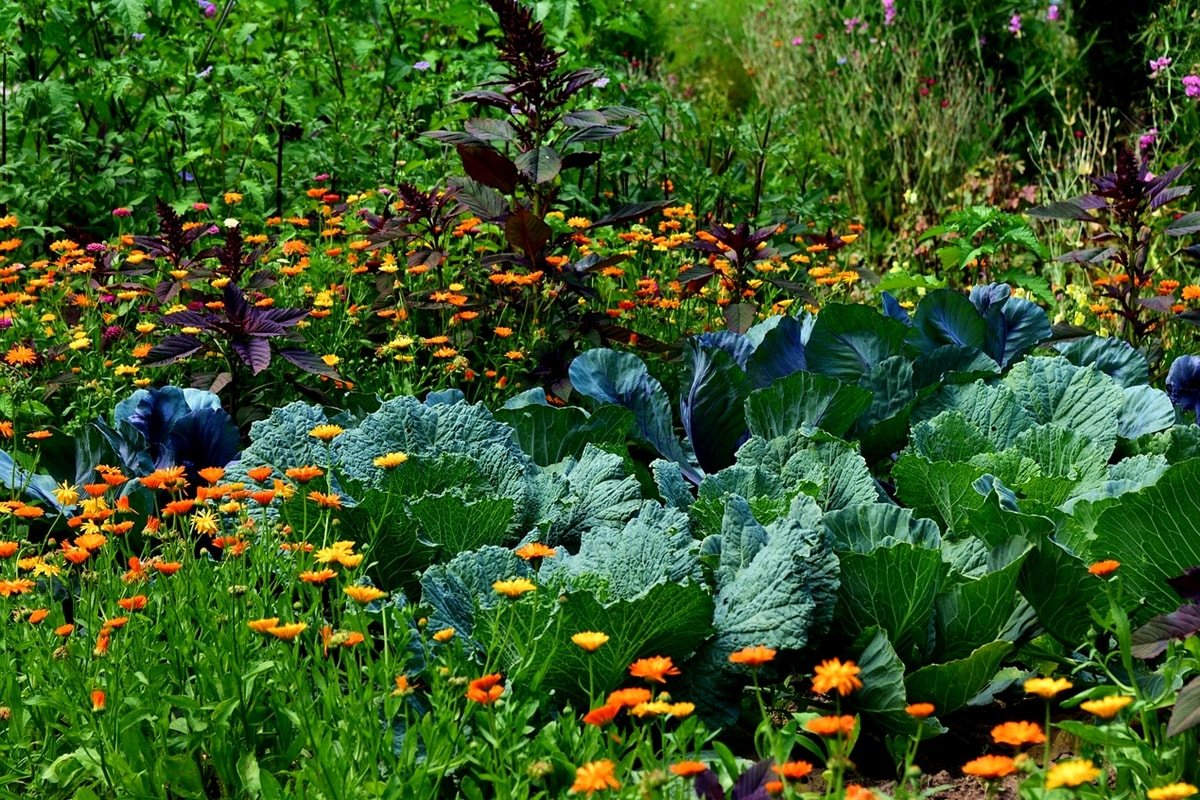 Mischkultur-Gemüsegarten