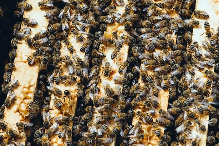Tipps kleiner Gemüsegarten Bienen halten Stadt