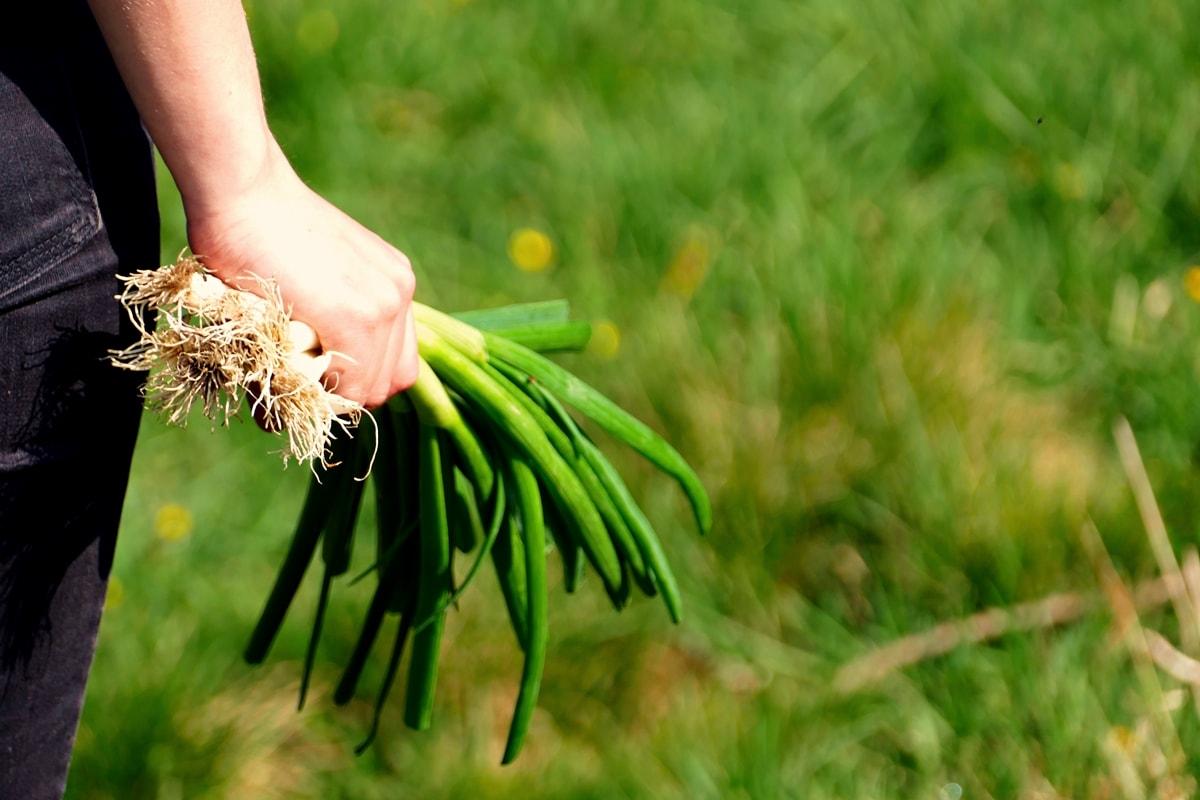 43 kr uter obst und gem sepflanzen die auch im schatten wachsen wurzelwerk. Black Bedroom Furniture Sets. Home Design Ideas