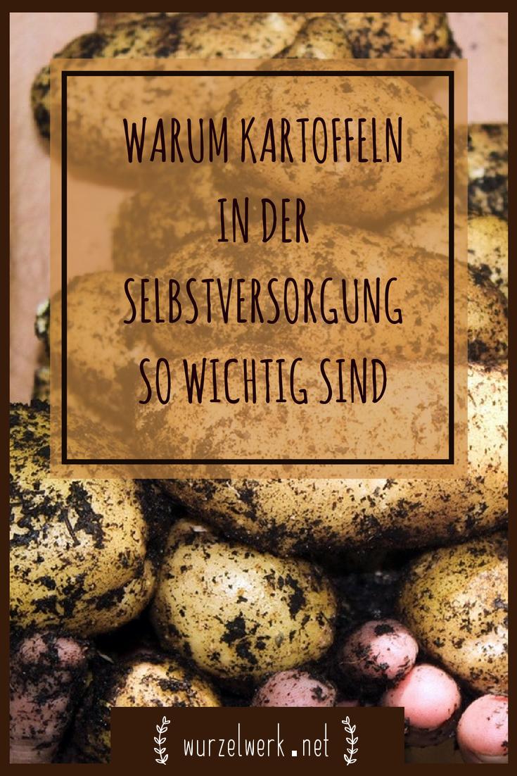 Kartoffeln-Anbauen-Gemüsegarten-Selbstversorgung