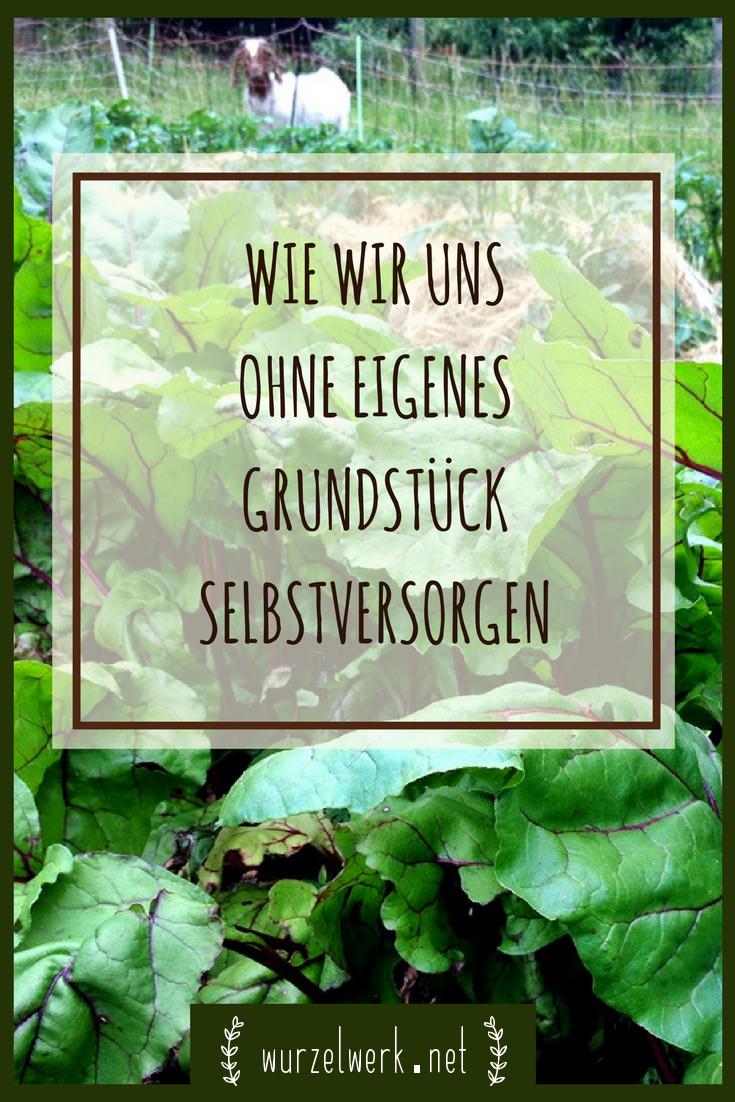 Du suchst ein Grundstück für deine Selbstversorgung? Vielleicht gärtnerst du schon auf dem Balkon, hast aber kein Haus auf dem Land und keinen eigenen Garten? Oder du möchtest Tiere halten, aber hast keinen Platz? Kein Problem! Du brauchst keinen Hof, um loszulegen. Erfahre hier, wie wir uns ohne eigenes Grundstück selbstversorgen. #Garten #Selbstversorgung #Gemüsegarten