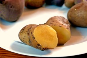 Kartoffelsorten-für-Garten-Bamberger-Hörnchen