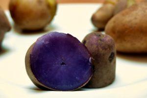 Kartoffelsorten-für-Garten-Blaue-Schweden