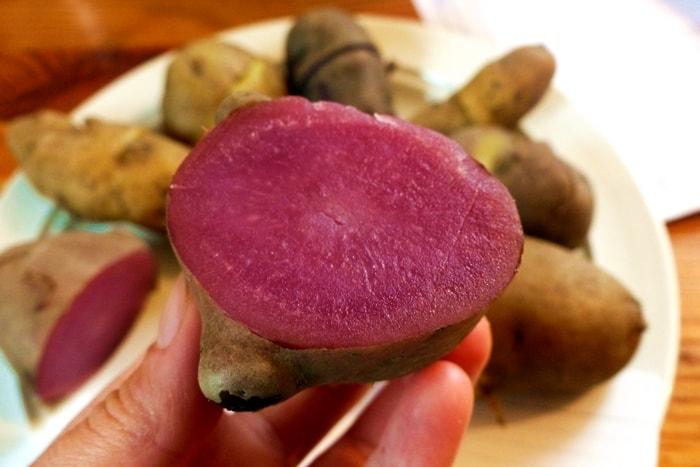 Kartoffelsorten-für-Garten-Heiderot