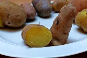 Kartoffelsorten-für-Garten-Rosa-Tannenzapfen