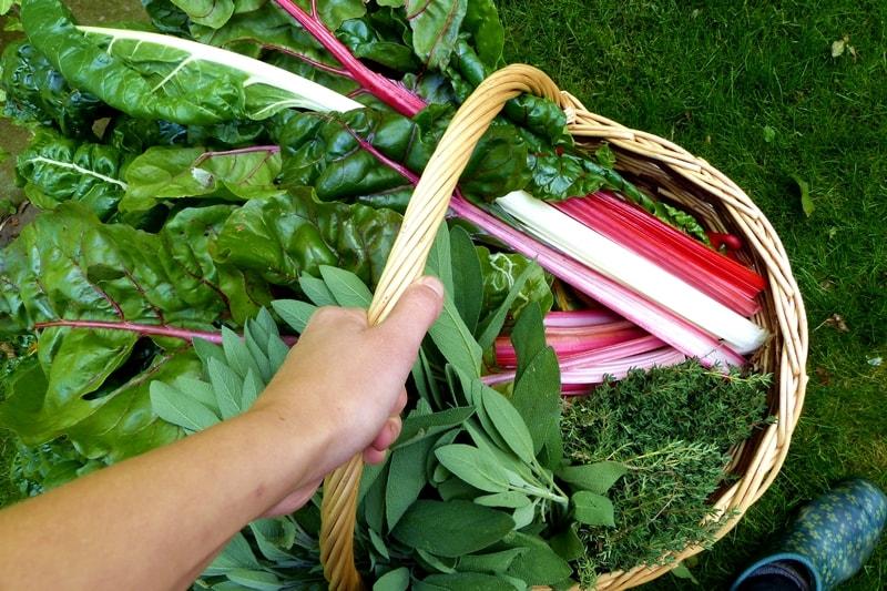 Gemüsegarten-pflegeleicht-wenig-Aufwand