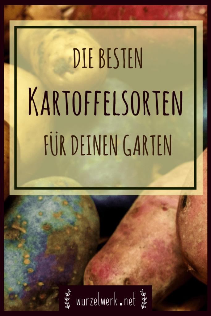 Die besten Kartoffelsorten für deinen Garten: Weißt du nicht, welche Kartoffelsorten du in deinem Garten pflanzen sollst? Dann bist du hier genau richtig. #kartoffel #gemüsegarten