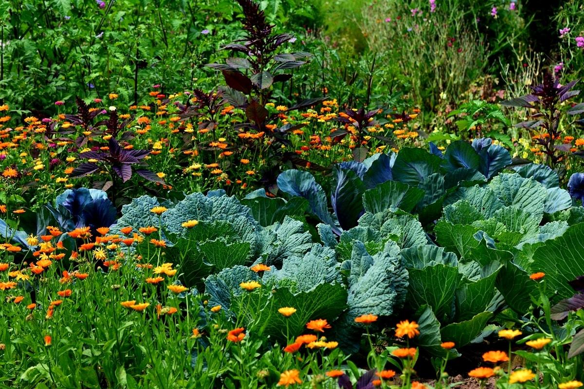 Gemüsegarten Anbauplan erstellen