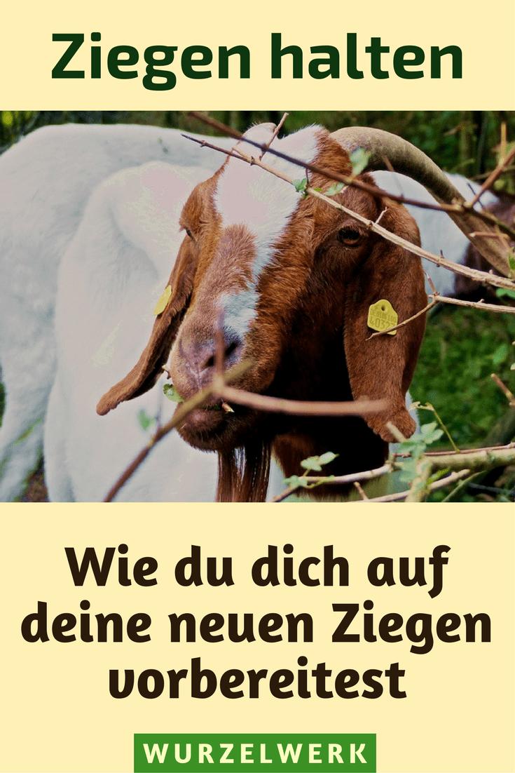 Ziegen halten für Anfänger: Wie müssen Gehege, Stall, Heuraufe, Spielplatz und Zaun aussehen? Hier erfährst du, wie du dich auf deine ersten Ziegen vorbereitest. #Ziegen #Selbstversorgung