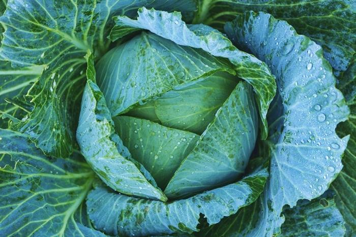 Anbauplan erstellen Gemüsegarten