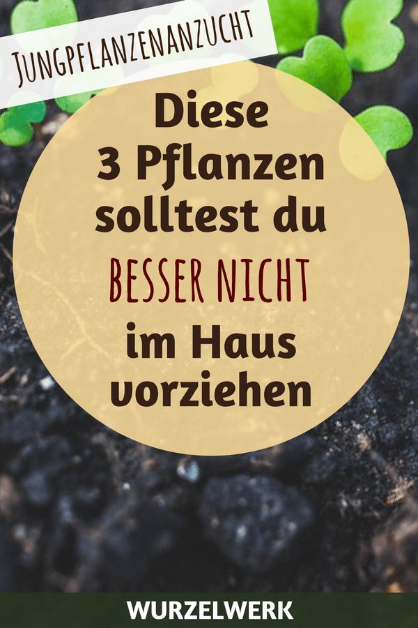 Tipps zur Jungpflanzenanzucht: Diese drei Pflanzen solltest du niemals im Haus vorziehen. Sie werden im Gemüsegarten...