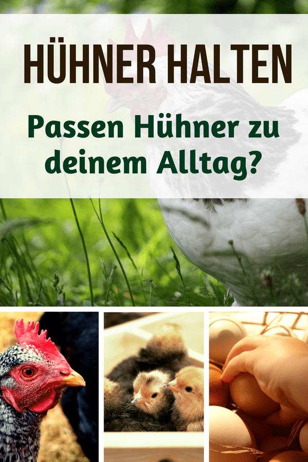 Hühner halten für Anfänger: Passen Hühner zu dir und deinem Alltag? Wie viel Arbeit macht es, Hühner im Garten zu halten? Wie kriegt man Hühnerhaltung und Vollzeitjob unter einen Hut? Antworten gibt's in diesem Artikel. #Hühner #Wurzelwerk