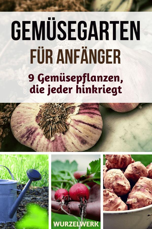 Gemüsegarten-Anfänger aufgepasst: Hier sind neun Ideen für Gemüsepflanzen, die jeder hinkriegt. Für einen produktiven Garten, auch ohne grünen Daumen und jahrelange Garten-Erfahrung. :) #Gemüsegarten #Gartenideen #Wurzelwerk #Selbstversorgung