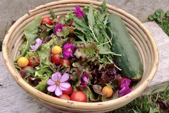 Gemüsegarten für Anfänger: Crashkurs in 11 Schritten ...