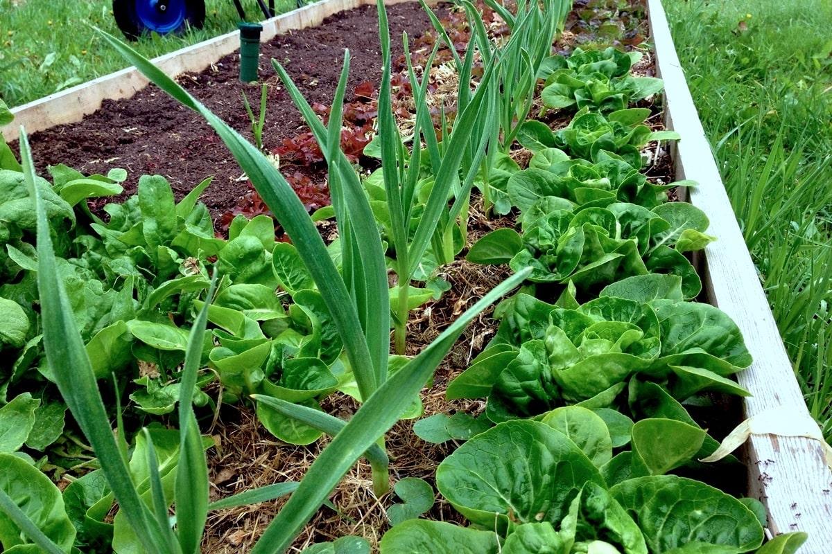 Aussaat und Pflanzen im März