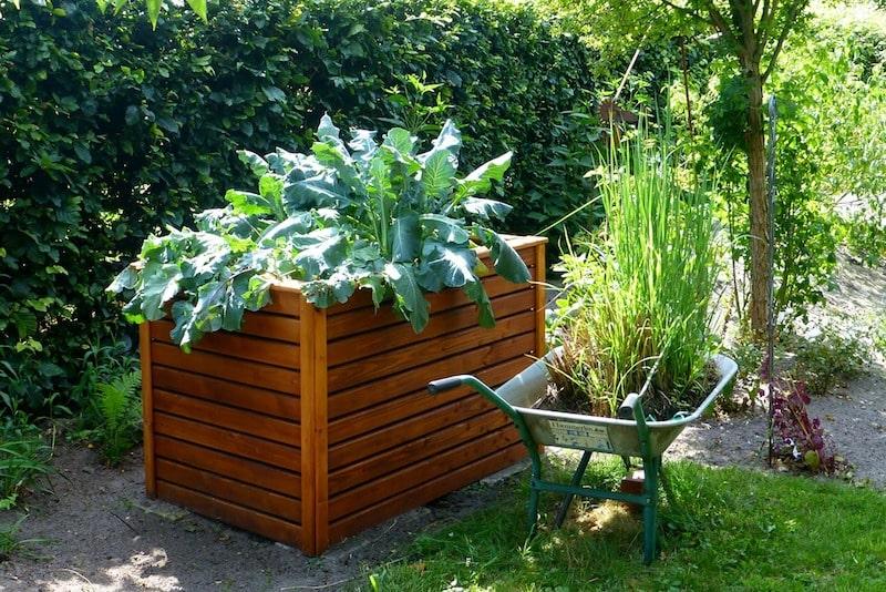 Hochbeet bepflanzen mit Kohl