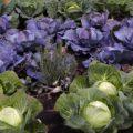 Aussat und Pflanzen im März
