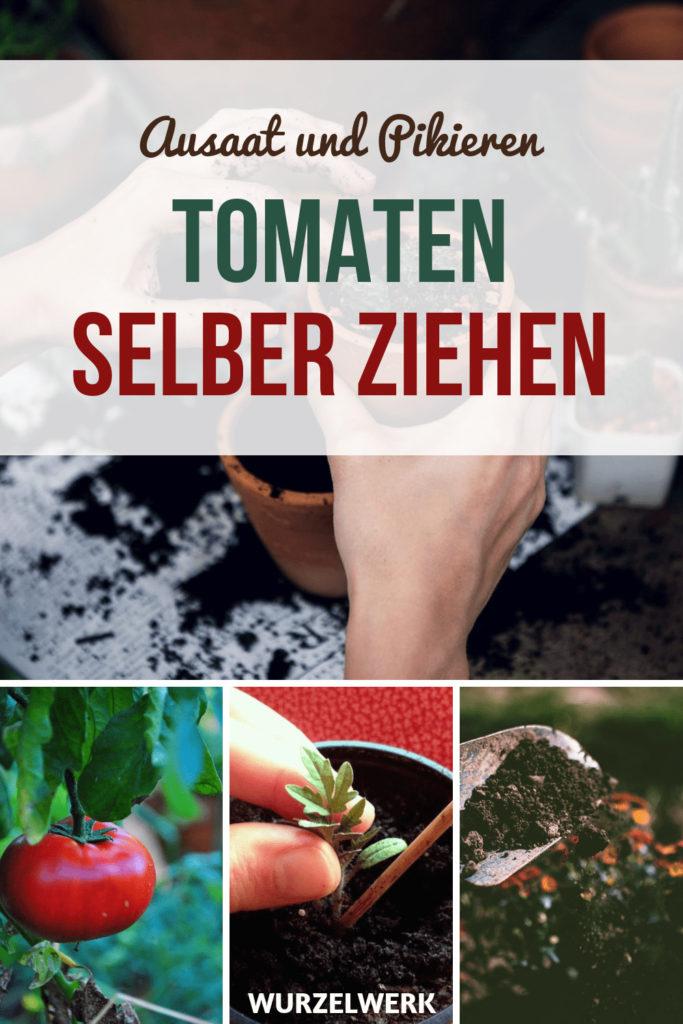 Kräftige Tomaten selber ziehen und pikieren: Wie du Tomaten im Haus aussäst und warum du das uaf keinen Fall an der Fensterbank machen solltest. #Wurzelwerk #Garten #Gemüsegarten