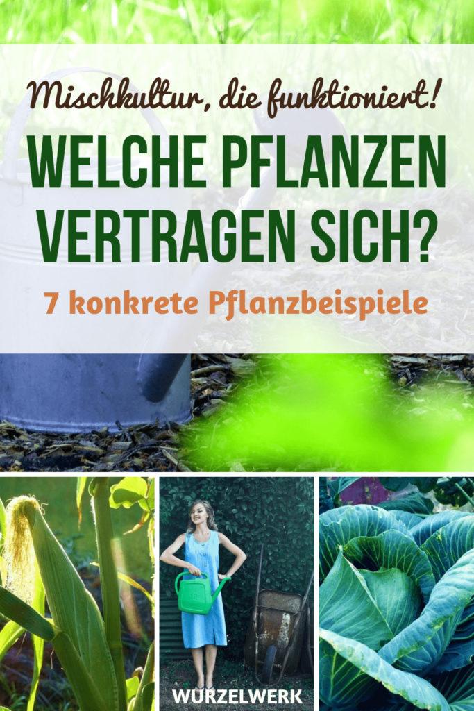 Welche Pflanzen vertragen sich im Gemüsegarten? Hier sind 7 konkrete Pflanzgemeinschaften und ein Beispielplan, den du 1:1 in deinem Nutzgarten umsetzen kannst. #Wurzelwerk #Garten #Mischkultur