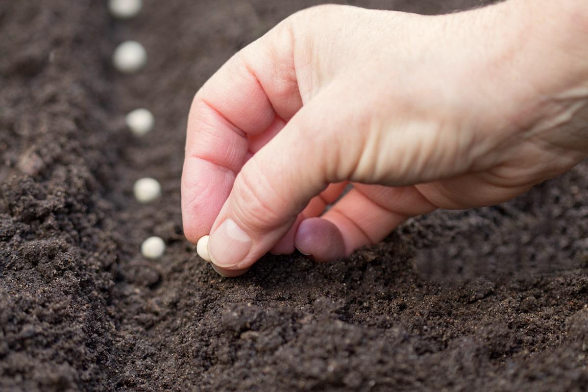 Aussaat und Pflanzen im April
