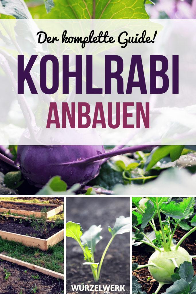 Der komplette Kohlrabi-Guide: Pflanzen, Anbauen & Ernten! Hier erfährst du vom Säen, Vorziehen und Pikieren bis hin zur Erntezeit alles, was ansteht, wenn du dieses wunderbare Gemüse in deinem Nutzgarten anbauen möchtest. :) #Wurzelwerk #Garten #Genüsegarten