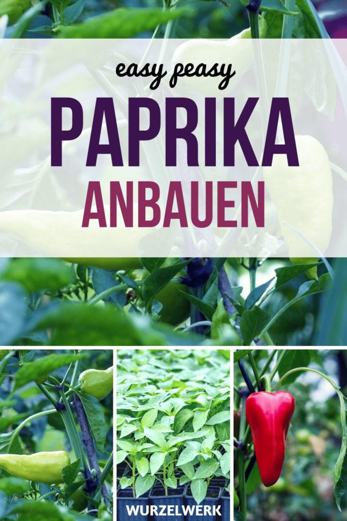 Paprika pflanzen und anbauen - und zwar so! Hier erfährst du alles, was du wissen musst, um im Topf oder Kübel auf dem Balkon oder im Gemüsegarten erfolgreich Paprika zu pflanzen und anzubauen, mit einem fertigen Pflanzplan. Gemüse anbauen ist nicht schwer! :). #Wurzelwerk #Nutzgarten #Biogarten