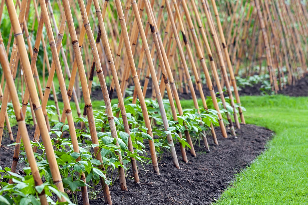 Rankhilfe Bambus selber bauen