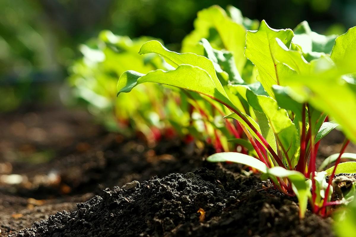 Was kann man im April pflanzen und säen?
