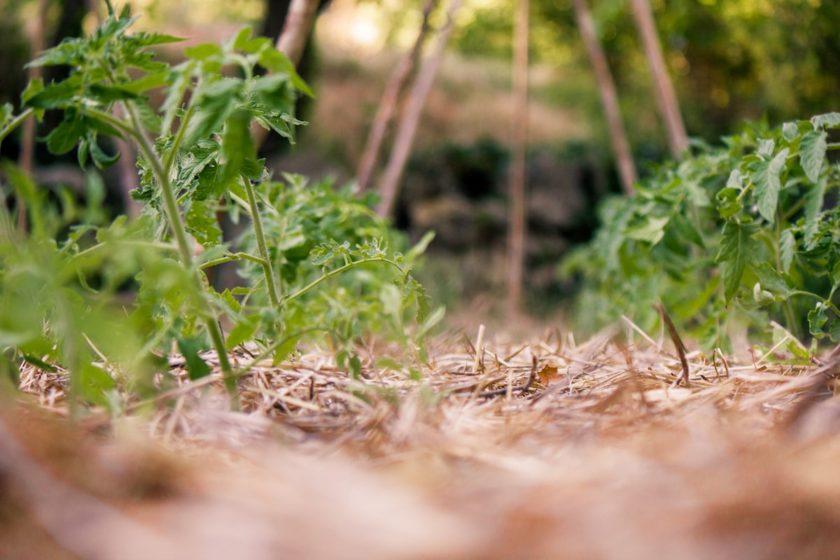 Was kann ich im Mai säen und pflanzen?