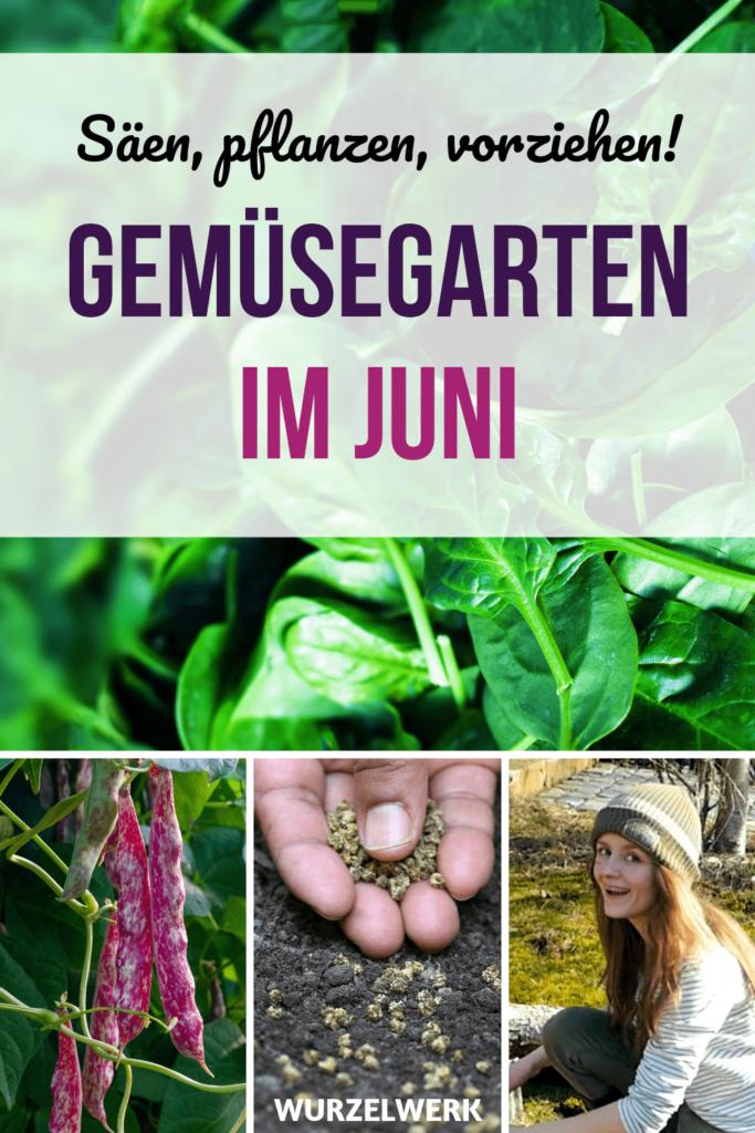 Gemüse säen und pflanzen im Juni