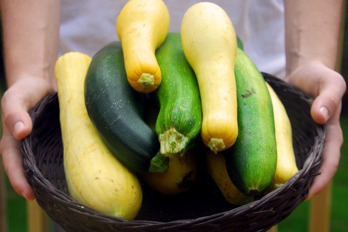 Zucchini einmachen
