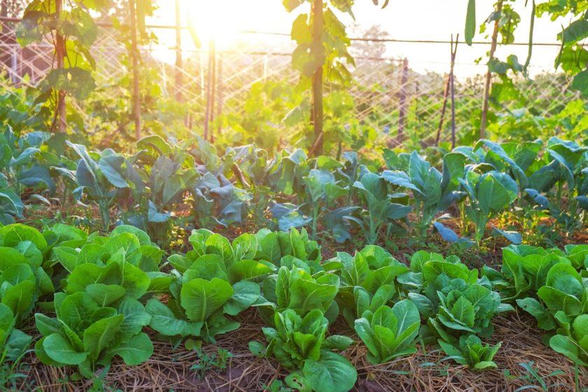 Was kann man im Juli säen und pflanzen