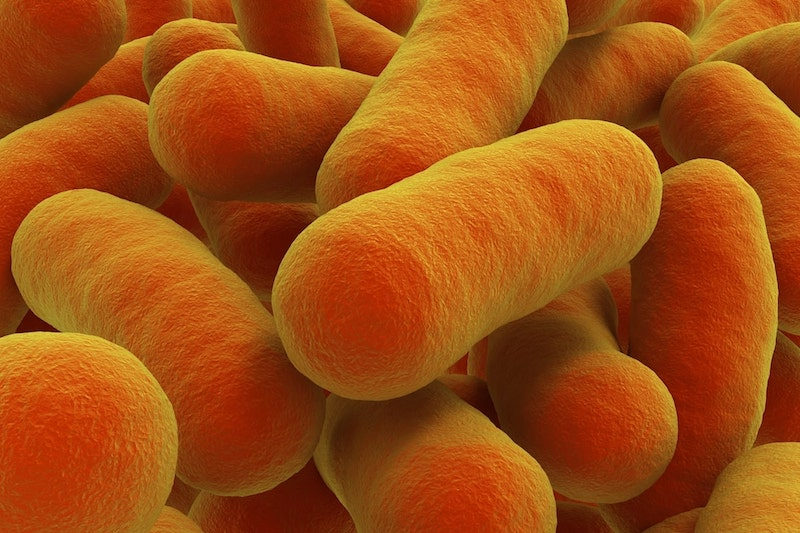 Botulismus-Bakterien