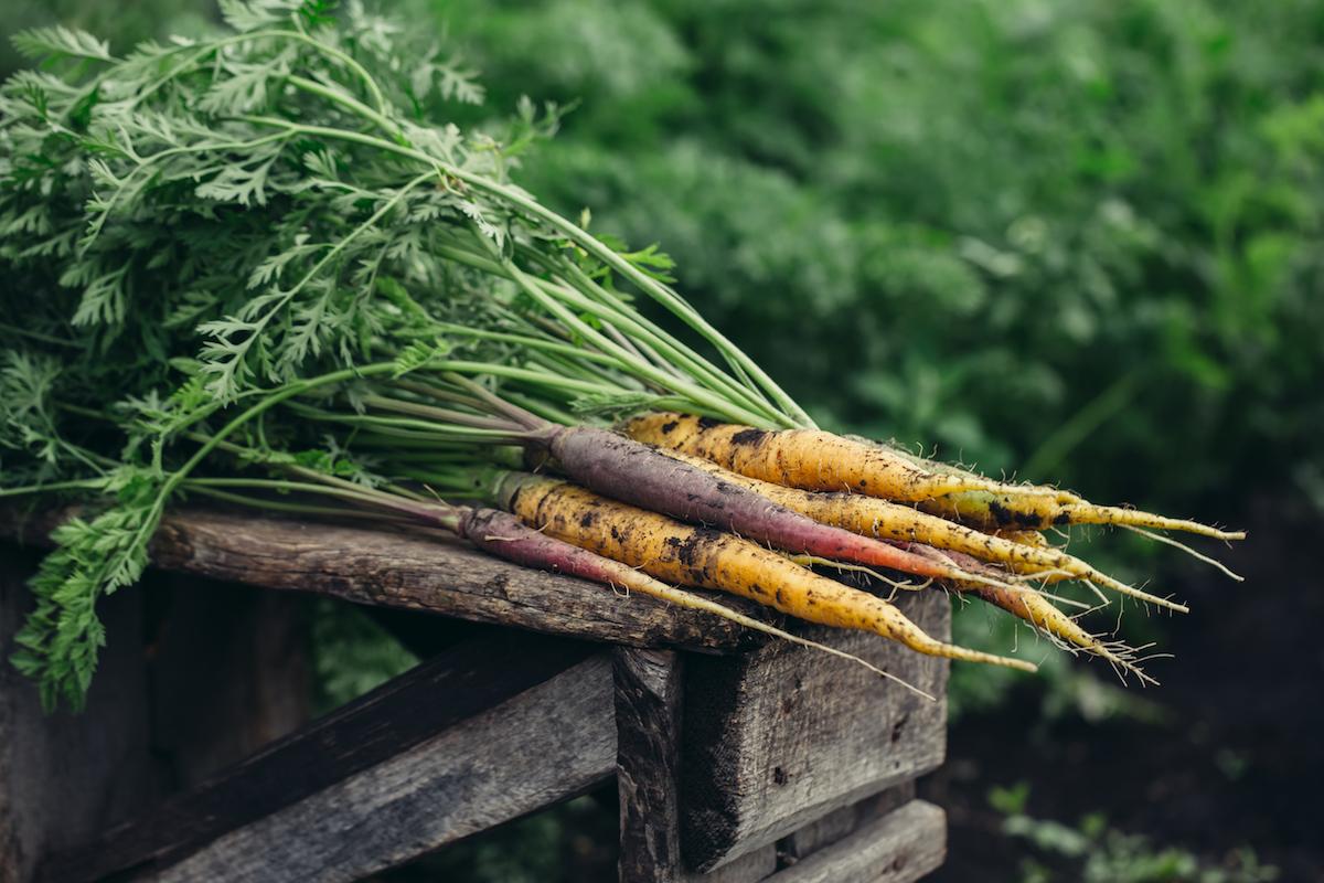 Säen und Pflanzen im September