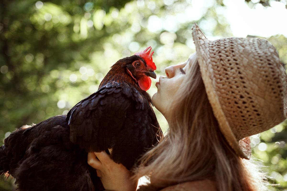 Selbstversorgung Garten Huhn