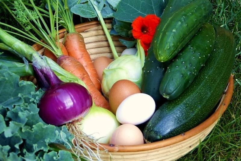 Karotten oder Möhren pflanzen, anbauen und ernten