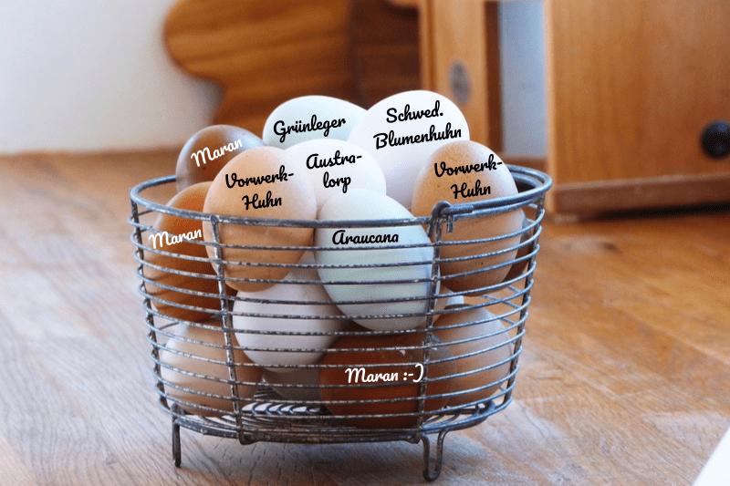 Eier von verschiedenen Hühnerrassen