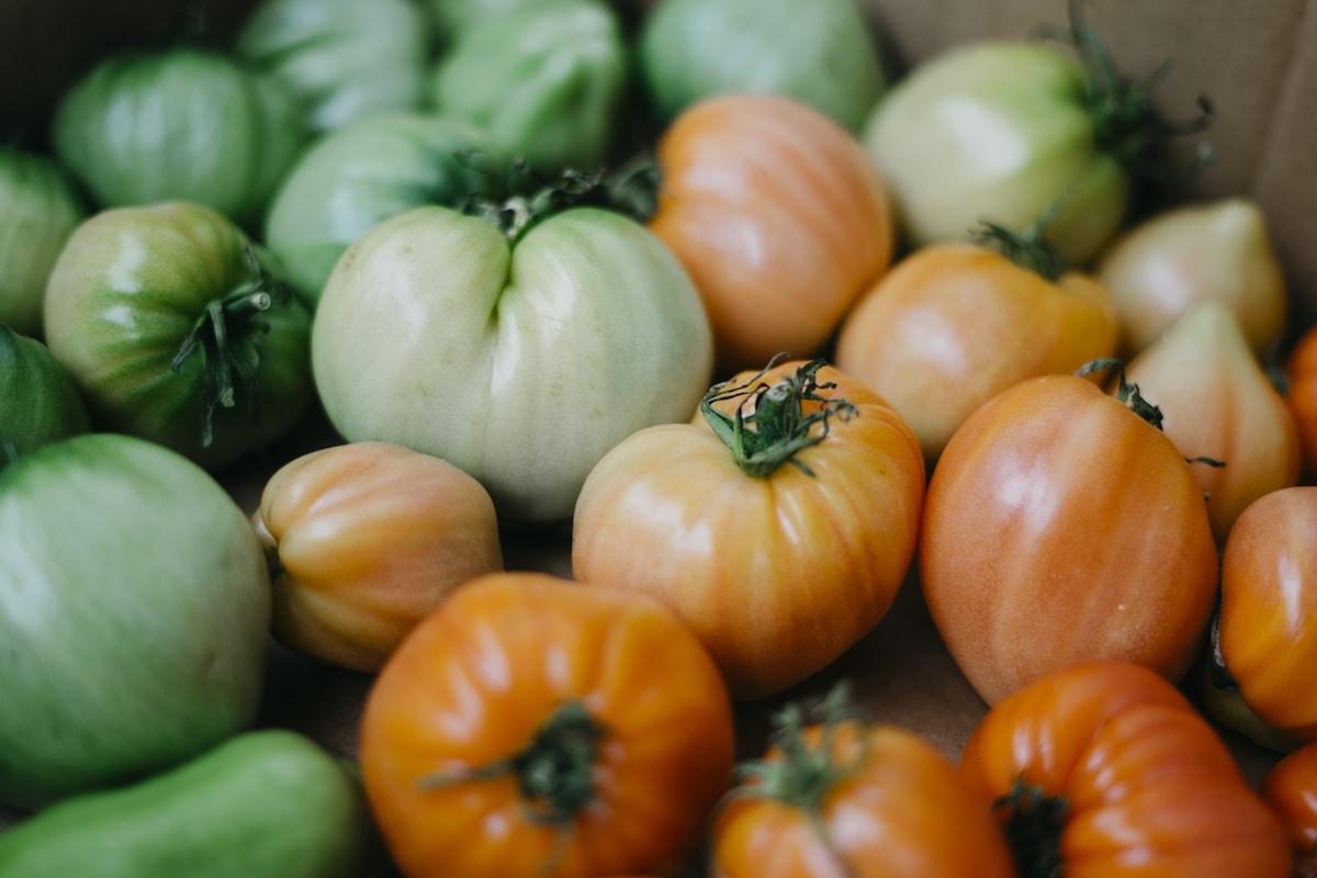 tomaten nachreifen lassen bis weihnachten eigene tomaten essen wurzelwerk