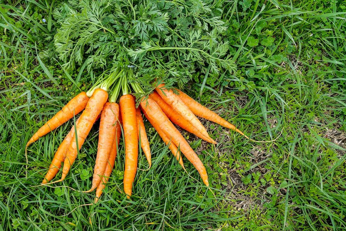 Gemüse pflanzen