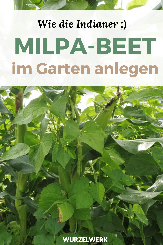 Milpa-Beet Indianerbeet anlegen