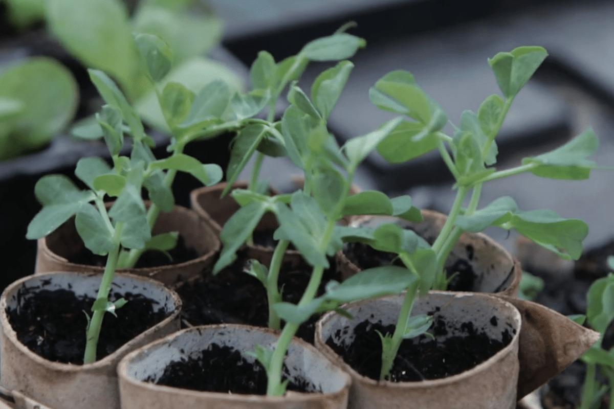 Pflanztöpfe selber machen für die Jungpflanzenanzucht