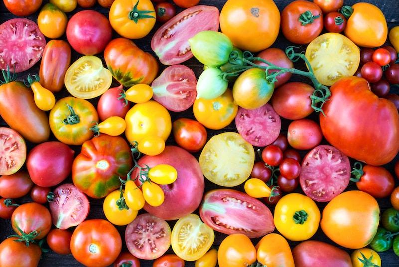 Tomatenpflanzen Ernte