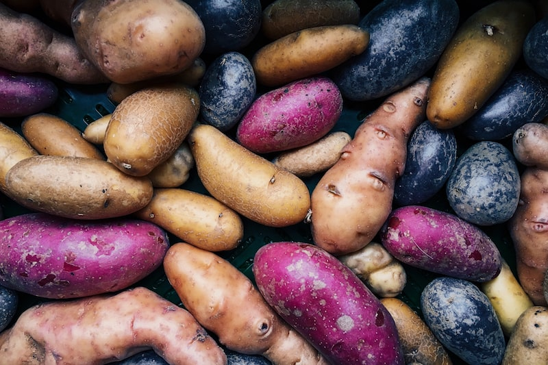 Kartoffeln anbauen pflanzen Sorten